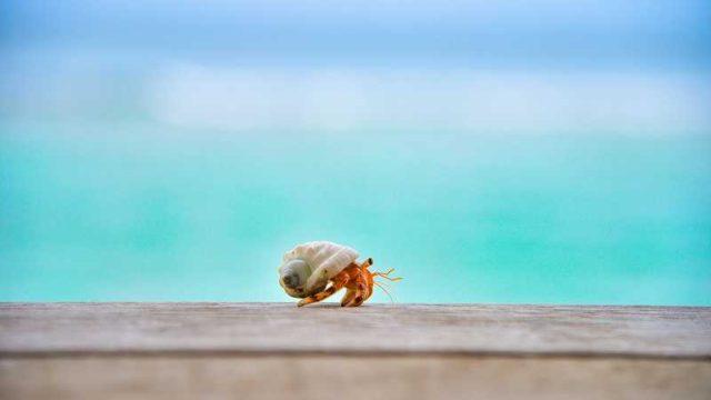 砂浜とヤドカリ