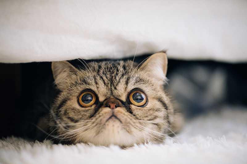 ブサカワ猫
