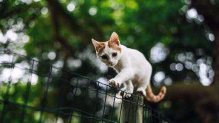 細い塀の上を渡る子猫