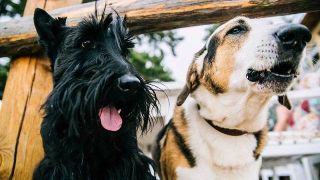 二頭で並んで座る犬