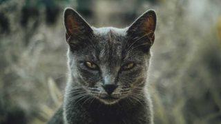 こちらをにらむ猫