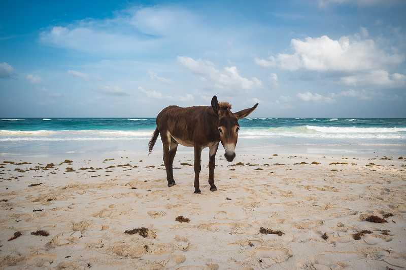 海辺の砂浜でたたずむロバ
