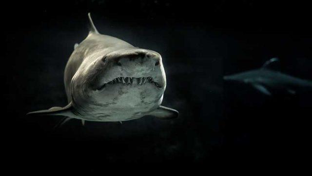 迫りくるサメ