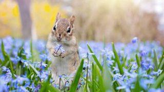 花畑とリス