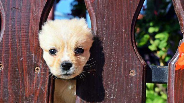 塀の穴からのぞき込む仔犬